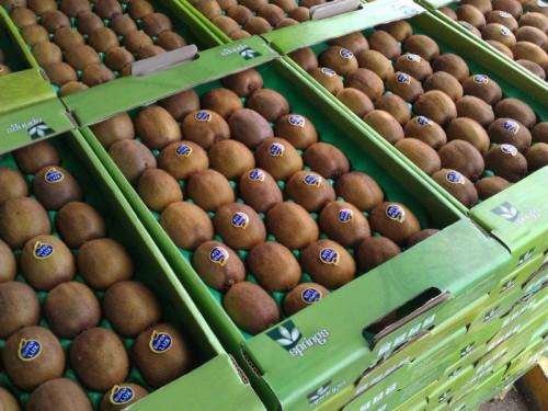 امحا 17 تن کیوی صادراتی ایران در جمهوری آذربایجان